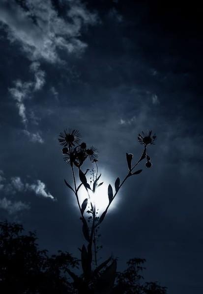 и снова седая ночь и только ей доверяю я знает седая ночь не все мои тайны но
