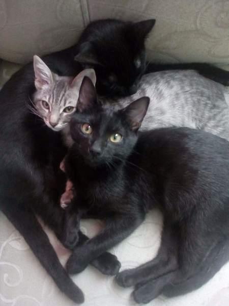 Hoy es el Día Internacional del Gato y ha llegado el momento de plantear una