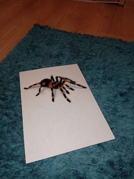 To ty się pochwal co tam u Ciebie poza tym że twój pająk odbiera kolejne życia