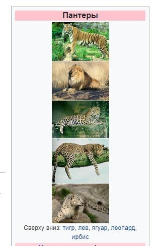 Какое животное вы предпочитаете Льва или Пантеру