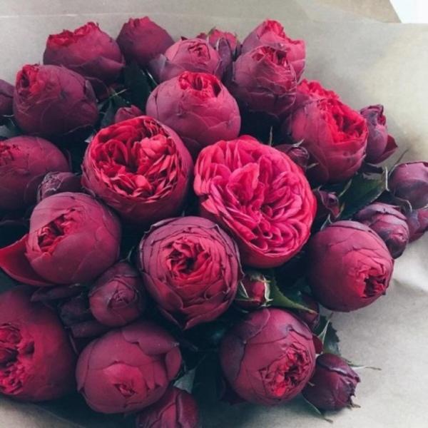 Есть любимые цветы у тебя Какие