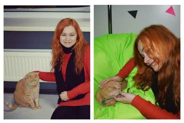 Ктото любит больше собак ктото кошек Хочу спросить вас именно о кошках любите ли